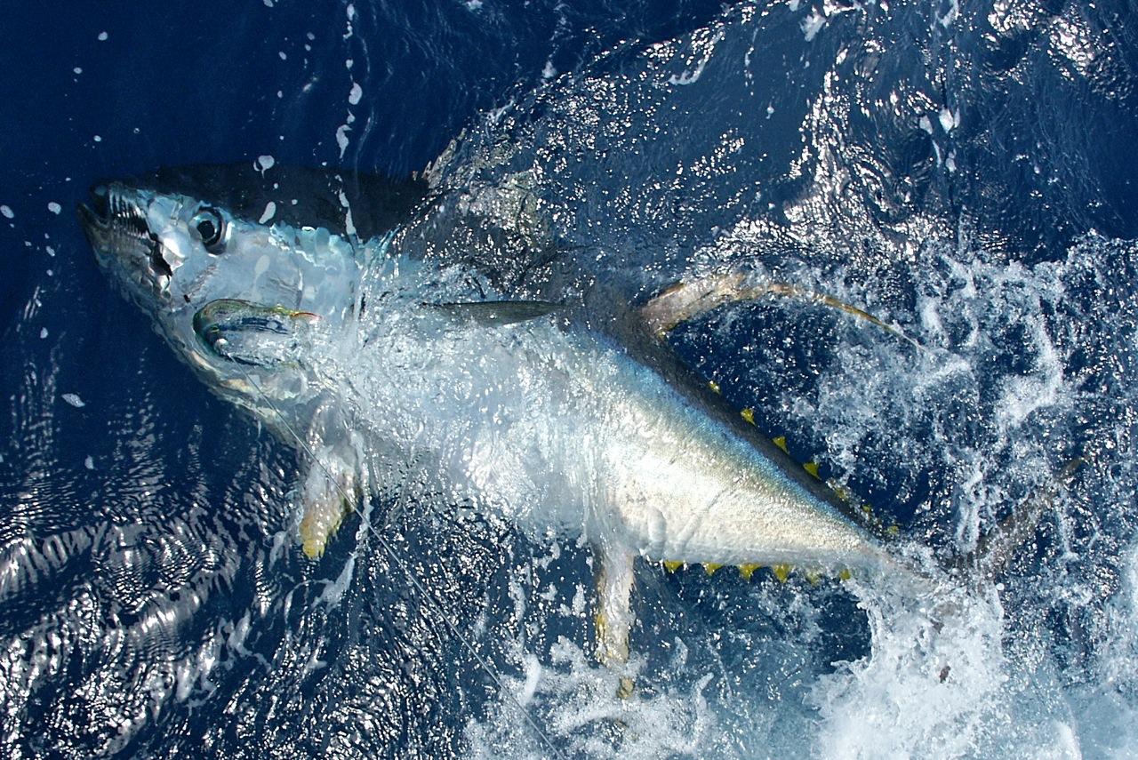 Canary - Fishing - 4